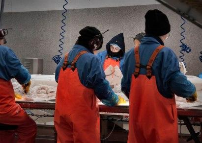 iceland, grindavik, Visir fisheries, fresh fish cleaning