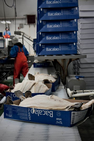 iceland, grindavik, Visir fisheries, bacalao