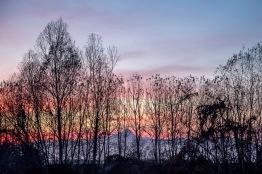 Italy, Piedmont, Il Monviso dietro i pioppi intorno al Maira, tramonto dicembrino