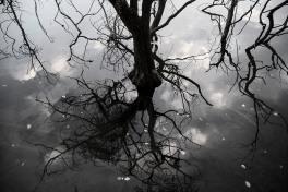 Italy, Piedmont, Avigliana lake, tree mirrored