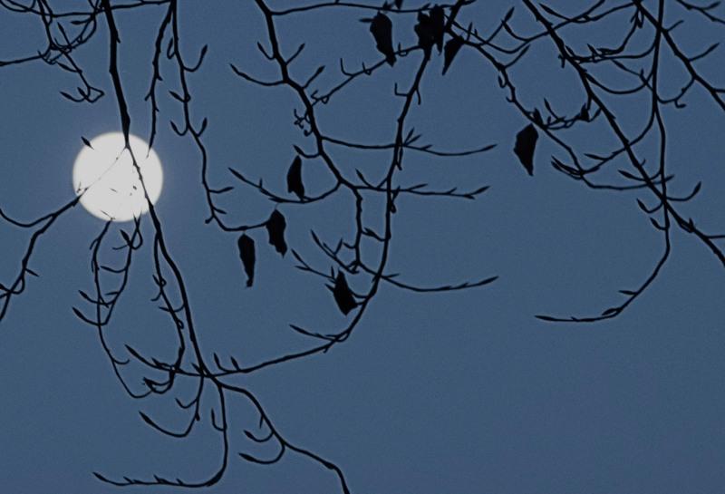 Italy, Piedmont, Mondovì moon