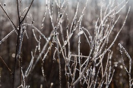 Italy, Piedmont, Roero landscape, soft rime in december