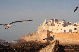 marocco, essaouira, medina