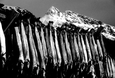 Norway, Lofoten Islands, Stockfish