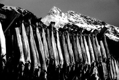 Norway, Lofoten Islands, Stockfish