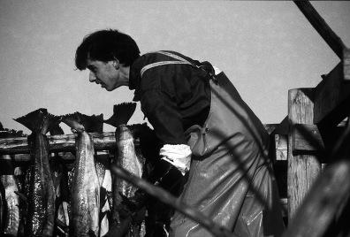 Norway, Lofoten Islands, cod fisherman